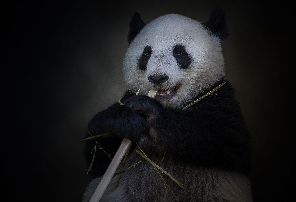 23 Punkte - Ronald Diensthuber - Panda