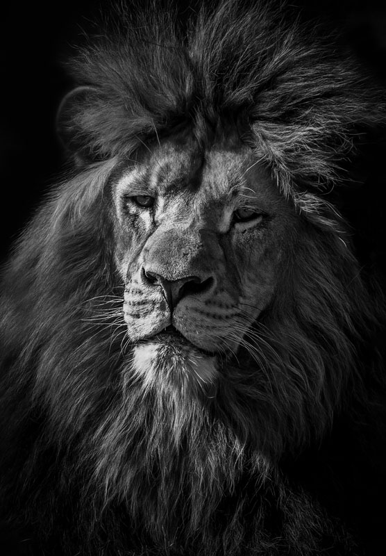 29 Punkte-Löwe - Diensthuber Ronald